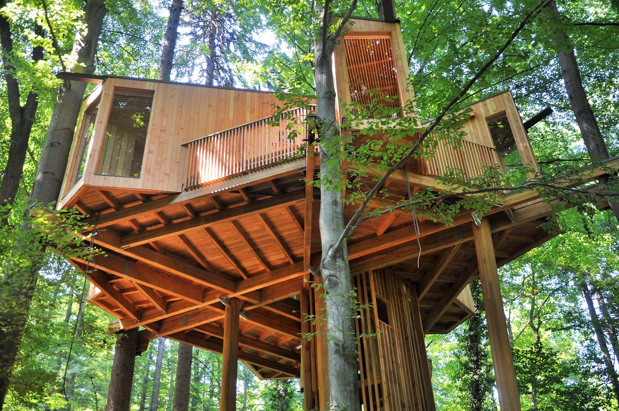 tree house Celje